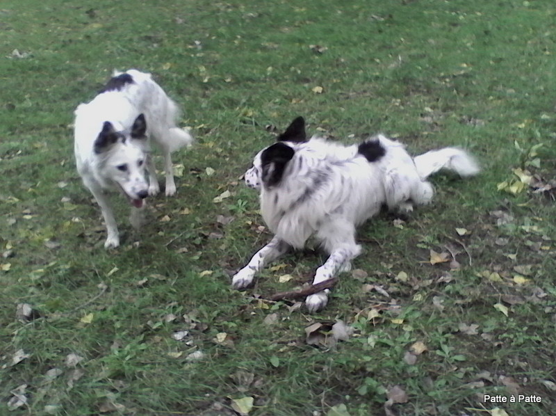 Jessie et Harry, border collie