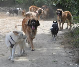 groupe chiens