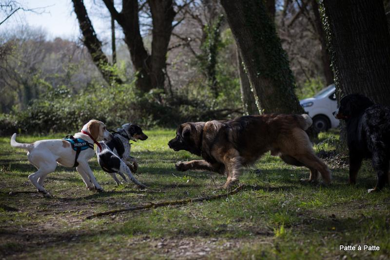 Interaction chiens